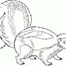 Small Picture Smiling Skunk Coloring Page Color Luna