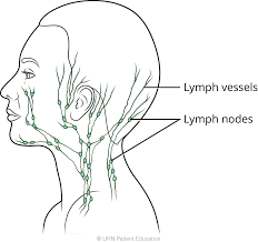 How to do lymphatic self-<b>massage</b> on your face, head and <b>neck</b>