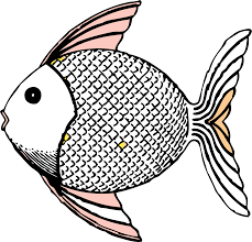 fish clipart black and white. Beautiful White Fish Clip Art Black And White  Tropical Fish Black White Line Art Coloring  Book Colouring SVG 95K In Clipart And I