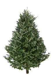 Selecting The Right Tree   NC State ExtensionTypes Of Fir Christmas Trees