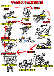 31 Rational Weider Home Gym Exercise Chart