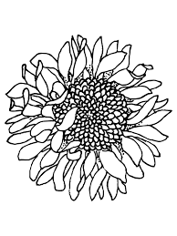 See more ideas about sunflowers and daisies, sunflower, sunflower pictures. Printable Head Of Sunflower Coloring Page For Both Aldults And Kids