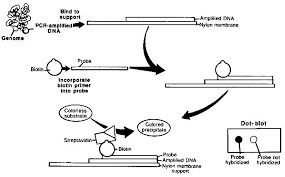 1 Introduction Dna Technology In Forensic Science The
