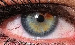 Eye Color Chart Eye Color Wikipedia