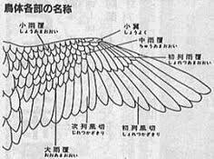 鳥の羽根 構造 Google 検索 Pegasus2019 鳥の翼アメリカ