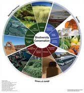 biodiversity and sustainable development essay  biodiversity and sustainable development essay