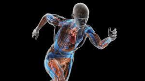 نتيجة بحث الصور عن physiology