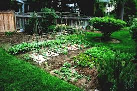 stunning vegetable gardening for beginners gardens design