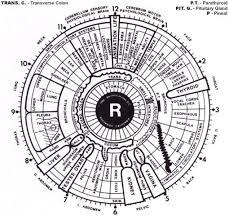 What Is Iridology Needbalance