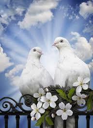 Afbeeldingsresultaat voor afbeeldingen spiritueel vrijheid en liefde