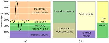 Volume And Capacity Chart Lung Volumes Definitions Measuring