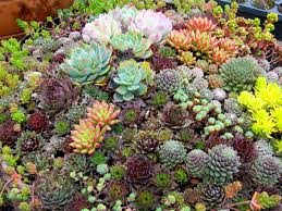 Small Picture Succulent Garden Designs Image On Fancy Home Interior Design and