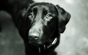 Les 20 Plus Belles Citations Canines De Lhistoire Contemporaine