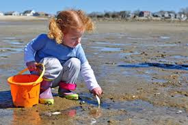 Where To Go Beachcombing On Buzzards Bay And 14 Objects To