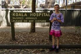 sydney s corner koalas and the koala hospital