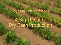 Plant Disease Management Soybean Cyst Nematode Publications