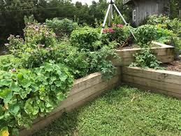 raised beds home garden information