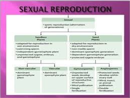 Flow Chart To Explain The Process Of Sexual Reproduction In