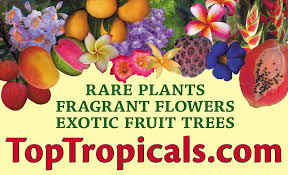Tropical Fruit Trees For Sale  Dugas LandscapeFull Size Fruit Trees For Sale