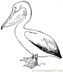 Small Picture Bbrg309a Coloring Page Free Pelican Coloring Pages