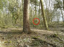 Image result for Bigfoot on cctv