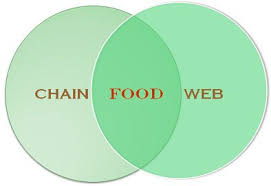 Producer And Consumer Venn Diagram Difference Between Food Chain And Food Web With Comparison