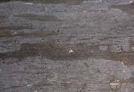termite damaged wood exterior