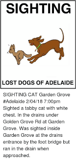 dogs memes and lost sighting lost dogs of adelaide sighting cat garden grove