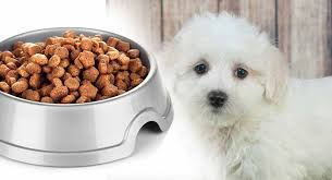 Beneful Healthy Puppy Feeding Chart Feeding A Maltipoo Puppy Routines Schedules And Amounts