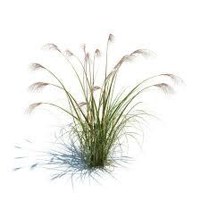 Green Tall Grass 3D model CGTrader