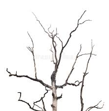 Download Branches of dead tree stock photo. Image of tree, plant - 21473794