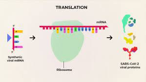 What are the advantages of an mRNA vaccine for COVID-19?
