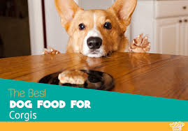 Best Dog Food For Corgis Reviews And Top Picks For 2019