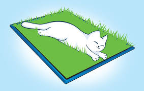make a grass bed for your indoor cat