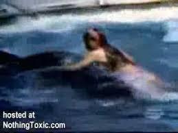 killer whale attacks on humans. Unique Whale Killer Whale Attacks Unsuspecting Girl Intended On Humans