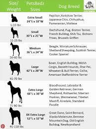 Labrador Retriever Height Chart Weight Labrador Retriever Online Charts Collection