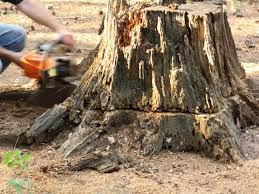 removing stump with chainsaw