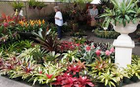 Small Picture 21 creative Tropical Garden Design Gold Coast izvipicom