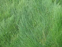 tall grass texture. Texture_27_by_Margotka Free Grass Textures Ready To Download Tall Texture