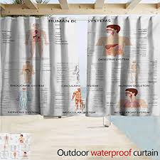 Drapery Fullness Chart Amazon Com Doorway Curtain Human Anatomy Complete Chart