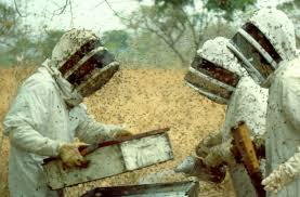 Bee Keepers Bee Removal Sarasota