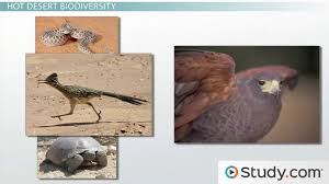 what is biodiversity definition and relation to ecosystem desert ecosystems how biodiversity impacts hot and cold deserts