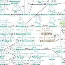 Nicholson Metabolic Pathways Chart 27 Veritable Metabolic Chart
