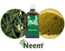 what is neem uses benefits of neem tea neem properties neem trees can grow benefits of neem include anti fungal neem properties