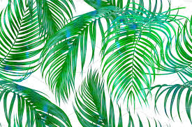 Palm Leaf Pattern Amazing Tropical Palm Leaves Pattern Graphic Patterns Creative Market