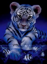 baby white tigers drawing. Simple White Pics For U003e Baby White Tigers Drawing On G