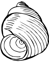 Small Picture Printable Seashell Coloring Pages Coloring Me