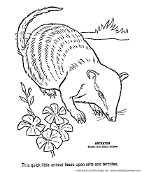 Small Picture Aardvark Coloring Pages Ant Eater Coloring Page and Kids