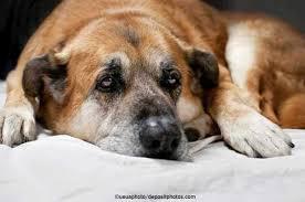 Der hund als traumsymbol ist ein in der regel männlich konnotiertes wesen. Arthrose Beim Hund Symptome Senior Hunde De