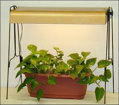lighting for houseplants. Terrific Explanation Of Lighting Houseplants And Understanding Footcandles.  | Garden Pinterest Houseplants, Plants Gardens For